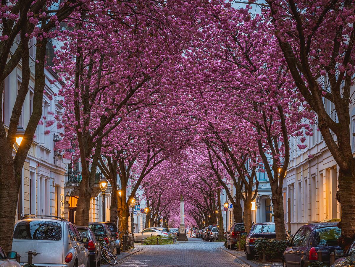 Straße in Bonn